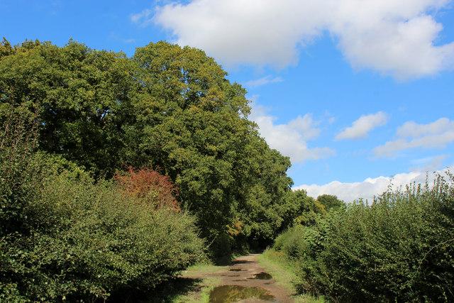 Bridleway beside Dews Wood