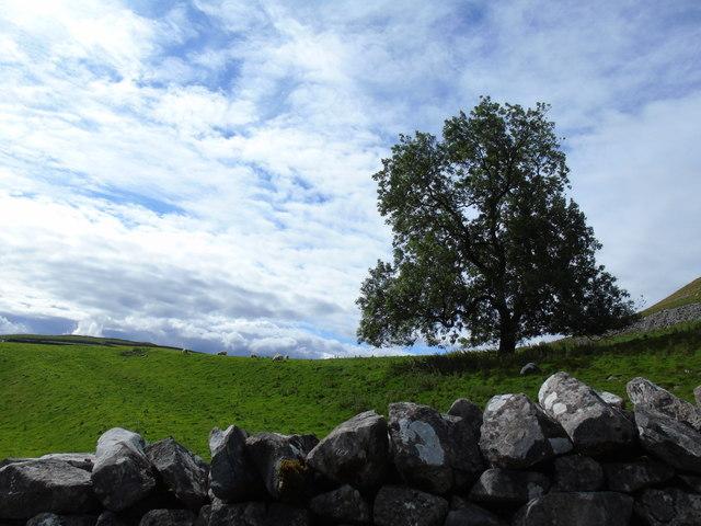 Ash below Cawden (north)