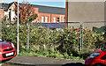J3673 : Nos 363-365 Beersbridge Road, Belfast (September 2017) by Albert Bridge
