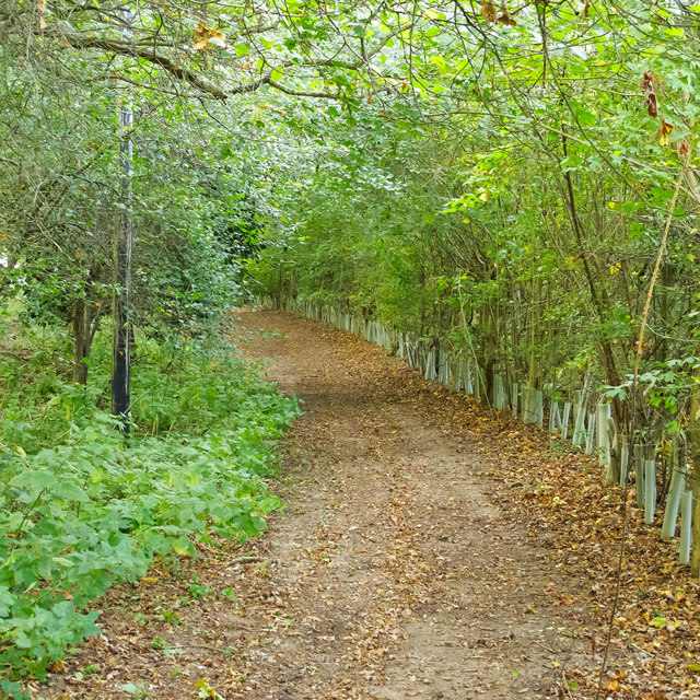 Bridleway through the trees, Leet Hill, Kirby Cane
