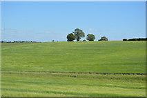 TL5335 : Rolling hills by N Chadwick
