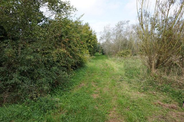 Mayflower Wood, Immingham