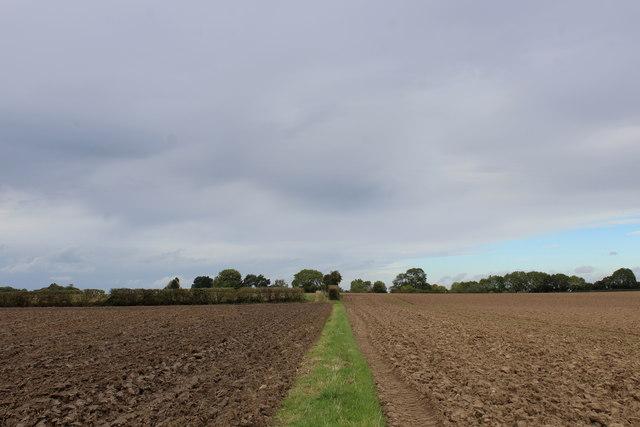 Footpath heading North towards Bilton-in-Ainsty