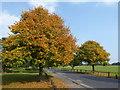 TQ4577 : Autumn colours on Winns Common by Marathon