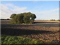 TG1028 : Trees in a field by Hugh Venables