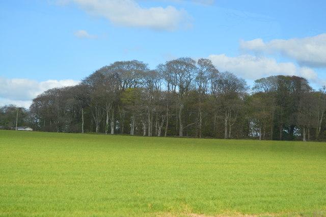 Woodland near Trelawne Gardens