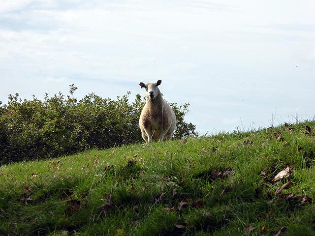 Looking at ewe looking at me...