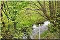 SX2463 : East Looe River by N Chadwick