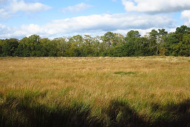 Rough Grassland
