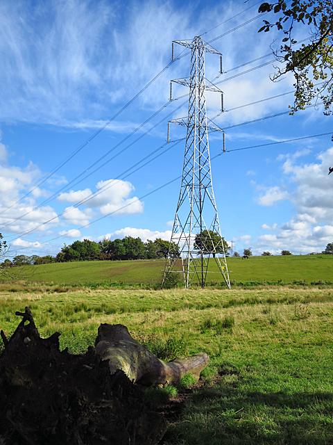Pylon and Logs