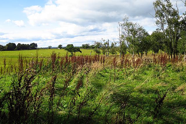 Field at Turniemoon