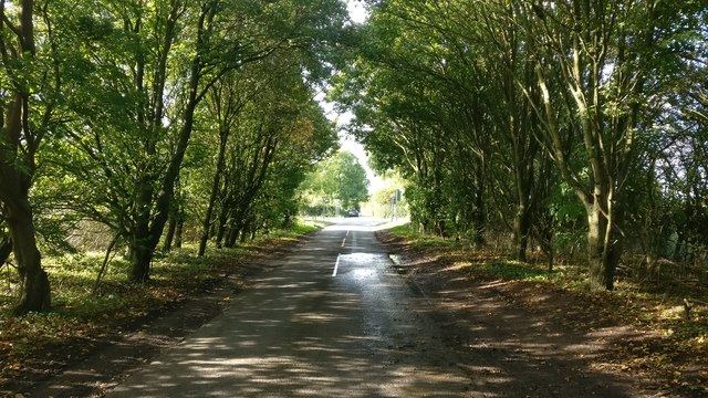 Tree lined Hill Lane near Countesthorpe
