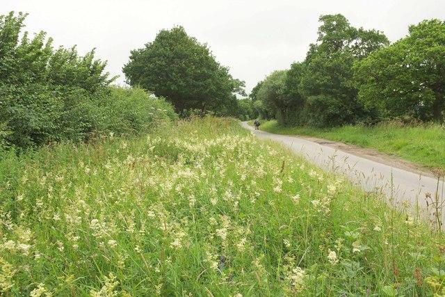 Meadowsweet by Netherwood Lane