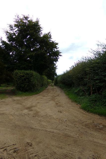 Petticoat Drove track, South Acre