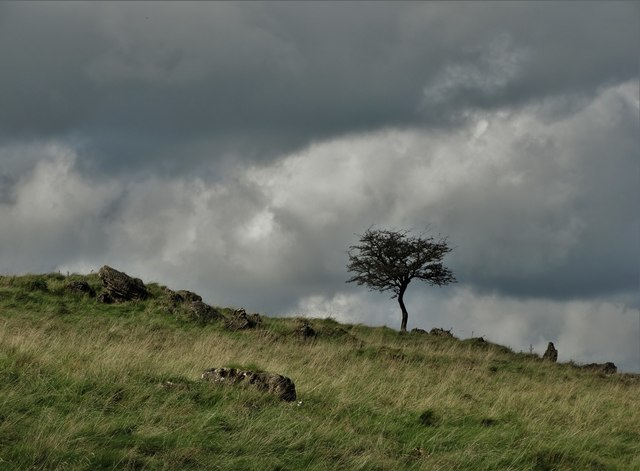 Solitary tree above Roystone Grange