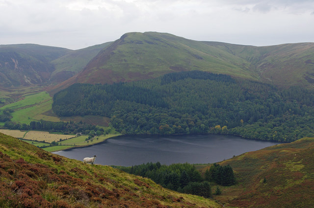 On Loweswater Fell