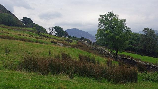 Rough grazing, SE of Grange Lane