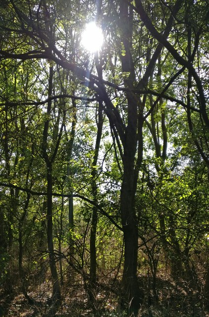 Woodland on the Aylestone Meadows