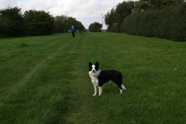 Bridleway on Mealand Hill (2)