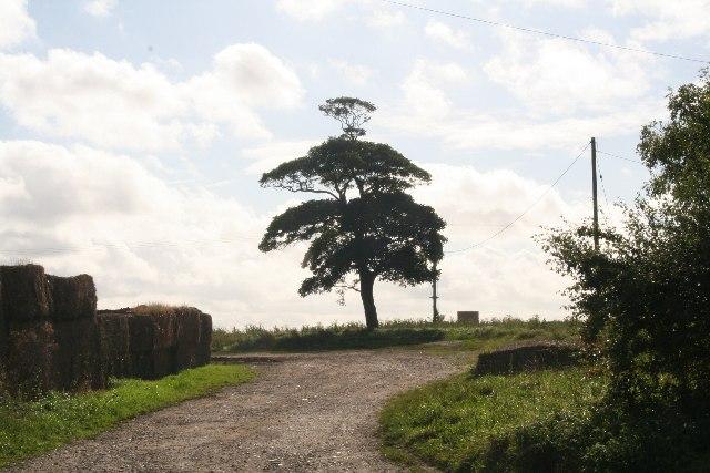 Lone tree at Glebe Farm, near Barnetby le Wold