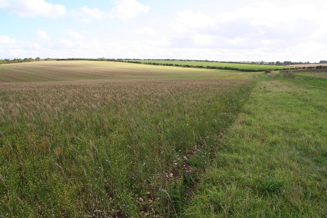 Bird food field by bridleway from Mealand Hill