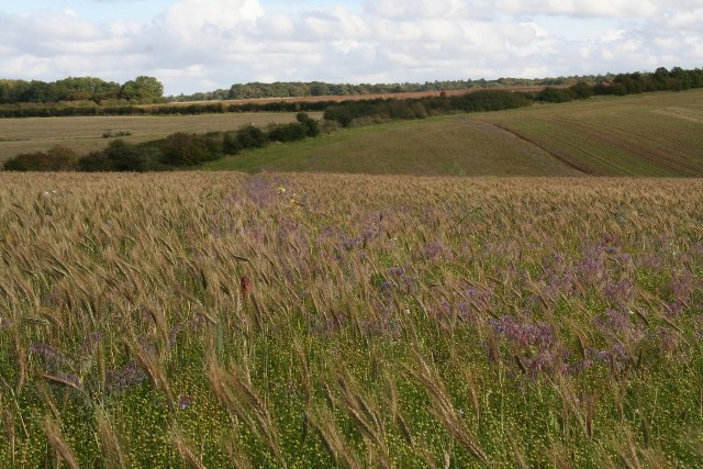 Bird food field by bridleway from Mealand Hill (2)