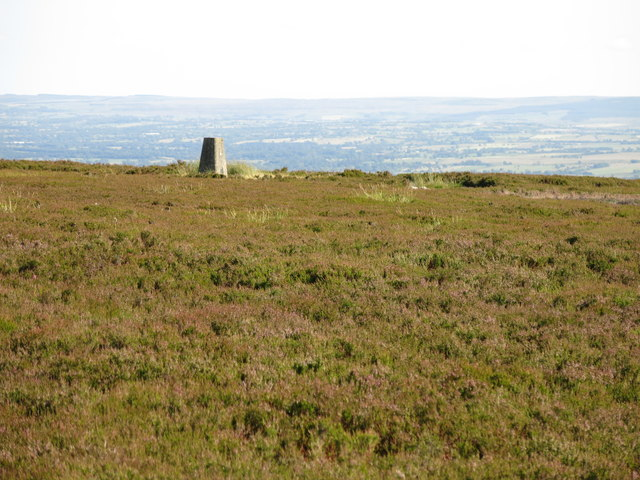 Monk's Moor around the trig point