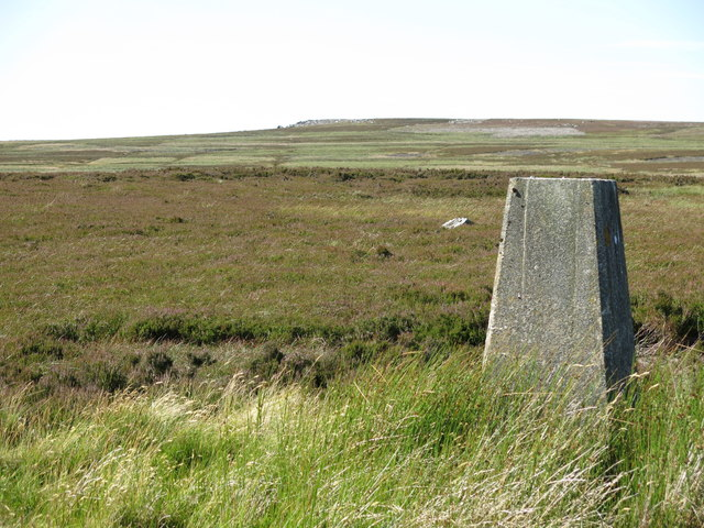Monk's Moor around the trig point (2)