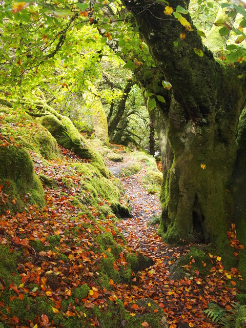 Path Near Beardown Lodge