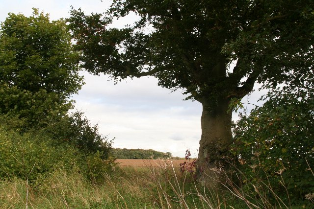 Tree and view from Owmby Wold Lane