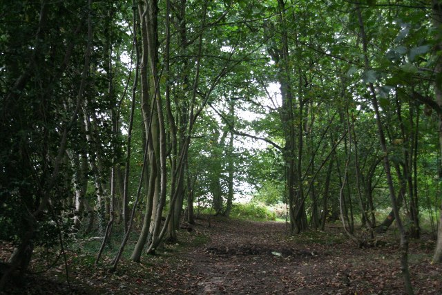 Path through Hendale Wood