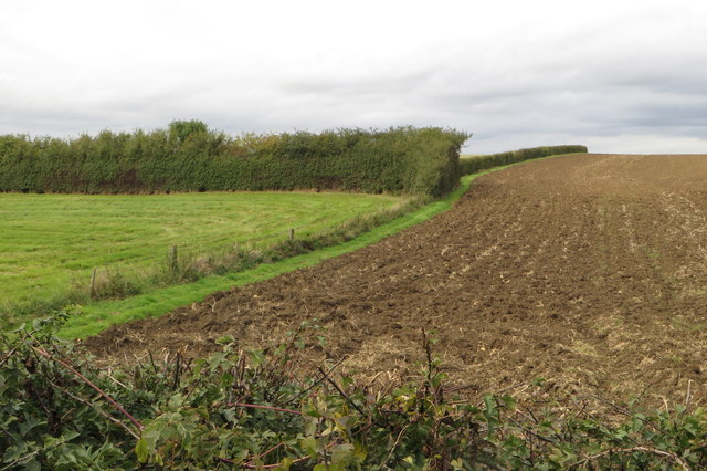 Field by the Bedford road