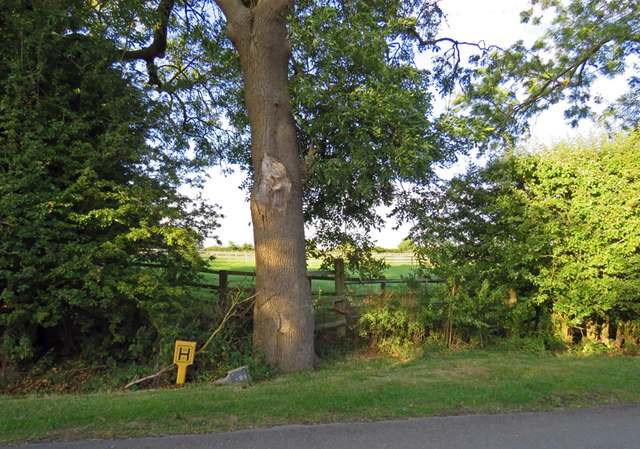 Verge of Gaddesby Lane with marker posts