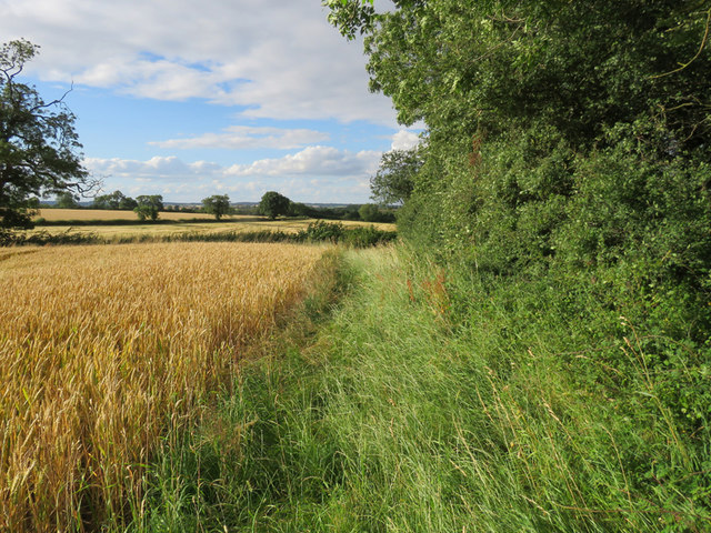Edge of Ashby Pastures on 20 July 2017