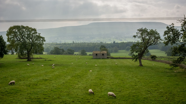 Farm land east of Redmire seen from train on Wensleydale Railway