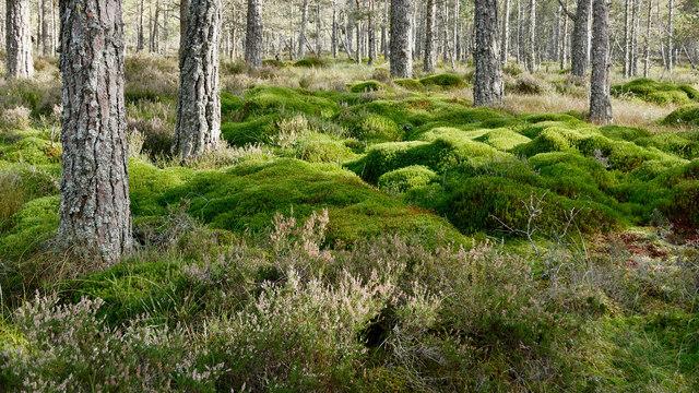 Transition in Monadh Mòr bog forest