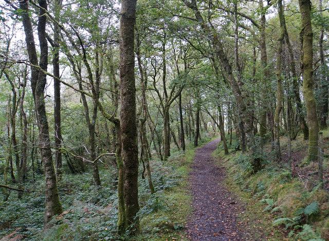 Path in Coed-cae-dû