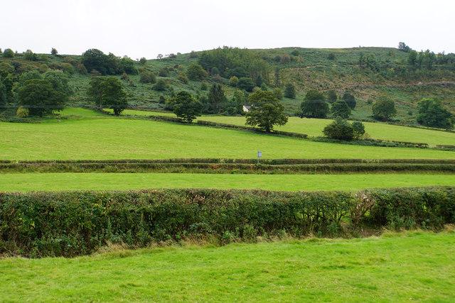 Hedgerows near Llawr-cilan