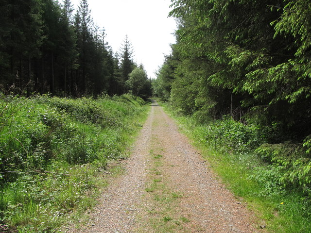 The northern section of the Annaloughan forestry road