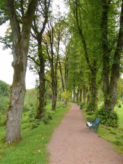 Path through an avenue of trees