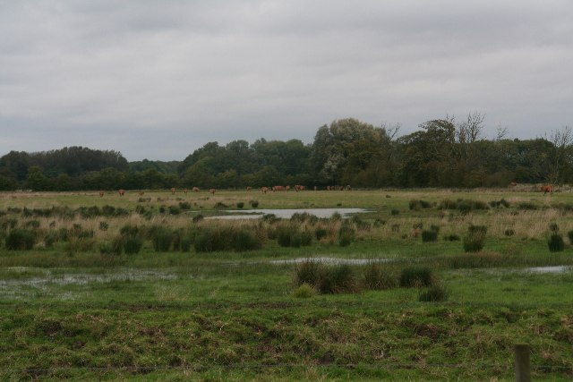 Marsh grazing by Carr Lane, Bonby Carrs