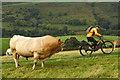 SK0487 : Brave cyclist : Week 40