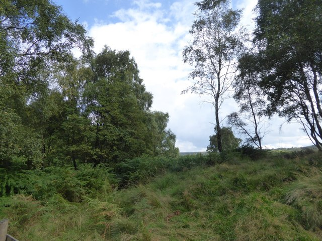 Trees and a boundary on Stoke Flat