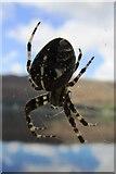 NN1073 : Spider! by Bill Kasman