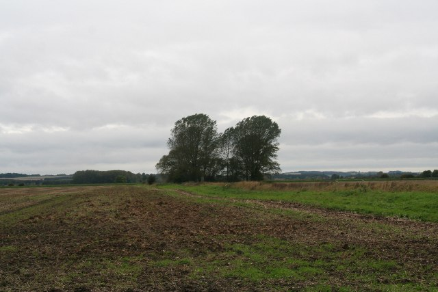 Group of trees on Bonby Carrs