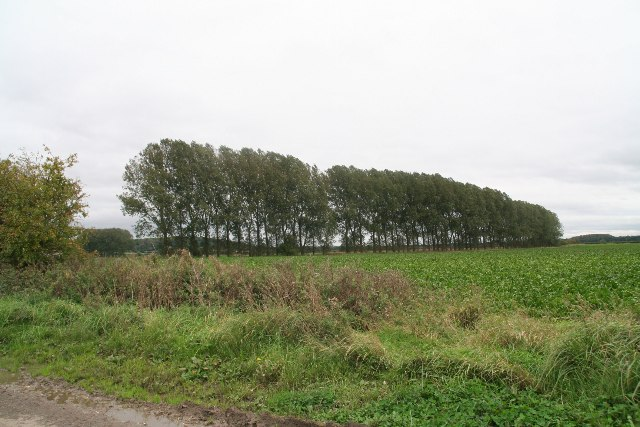 Line of poplars off Carr Lane, Worlaby