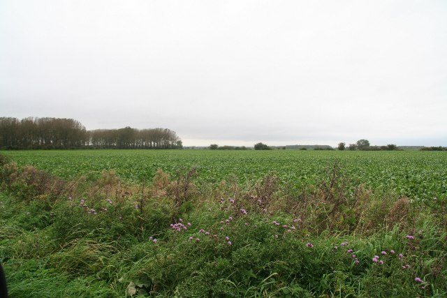 Farmland off Carr Lane, Worlaby