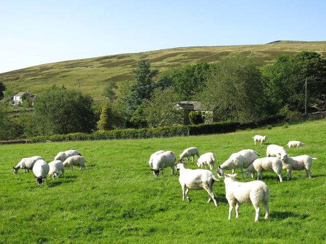 Pasture at Snaisgill