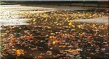 SX9164 : Wet leaves, Upton Park by Derek Harper