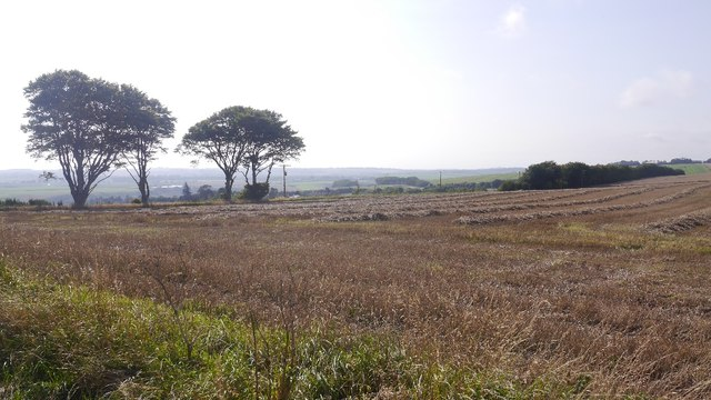 Harvested field above Lunan Bay